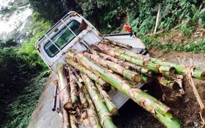 森を切り開きバナナの木を切り落とす!