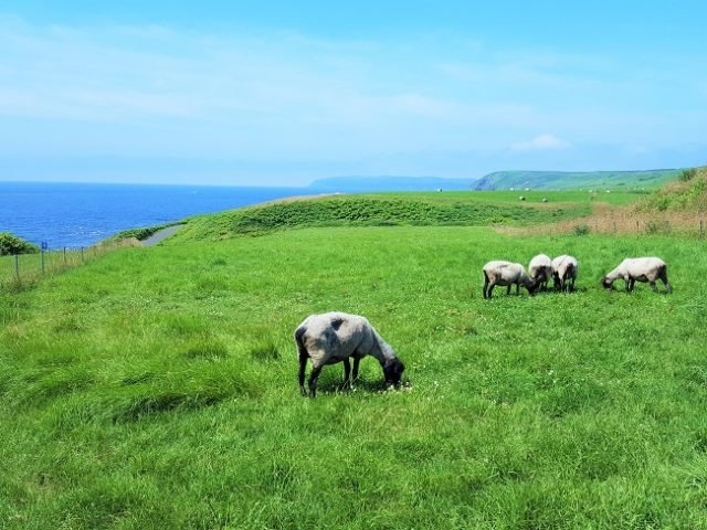 北海道の島は南の島より忙しい!? 夏の焼尻島と天売島は最高だ!