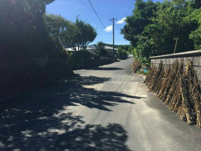 喜界島ではこうして道路にゴマが干してある風景がたくさんみられました。