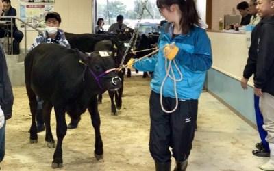貴重な体験、牛の競り見学!