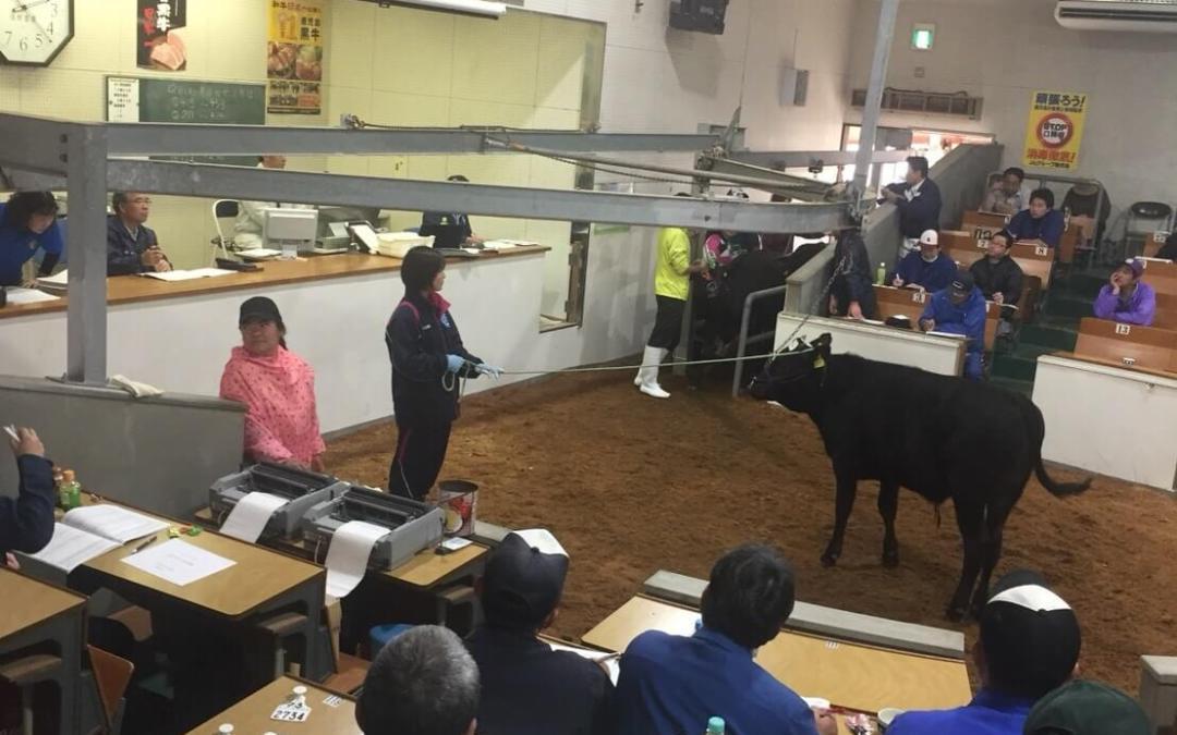 牛の競り見学!