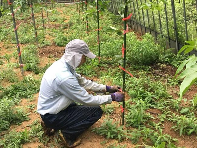 雨の畑作業