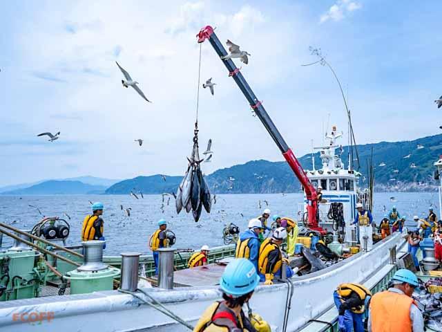 漁船乗船体験
