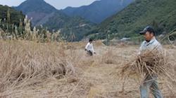 四万十川での農業体験