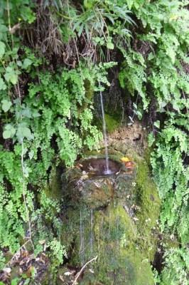 La Font del Bosc Negre