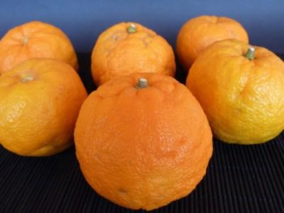 naranjas de sevilla