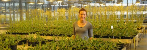 Heidi is working on the Sorghum project