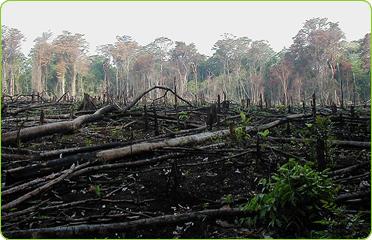 Deforestation for paper