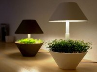 Eco Gadgets: Lightpot makes indoor plants even more