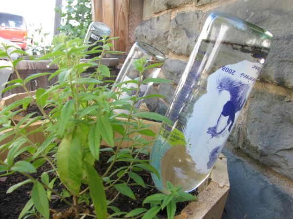 Bottle to water the plants