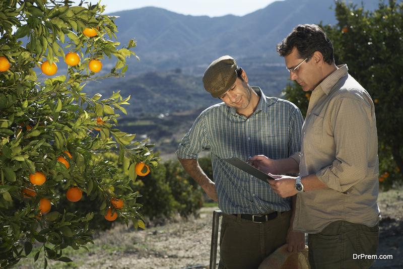 Managing-a-Citrus-Orchard