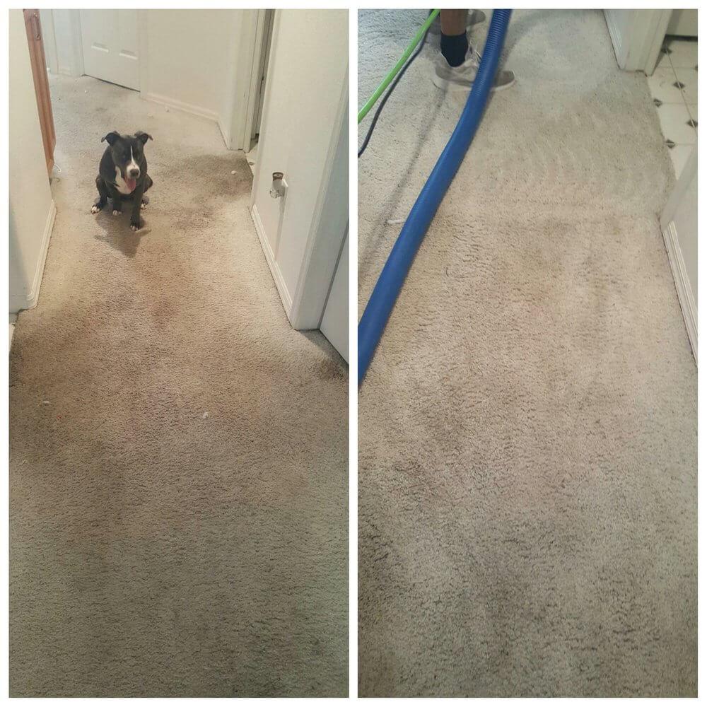 Carpet Cleaning Services Las Vegas Eco Friend Carpet Care