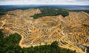 Deforestation avoided in circular economy
