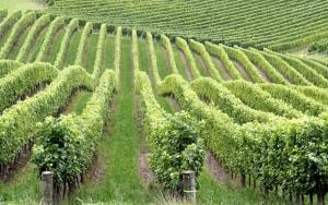 it's not all organic wine