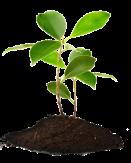 plant-200x250