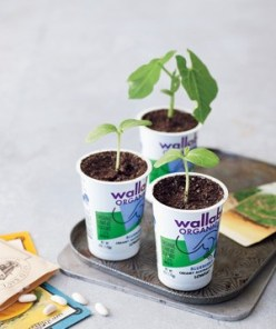 Poke a few drainage holes in the bottom of a yogurt cup and start growing seeds there before transplanting them to larger pots or garden beds.