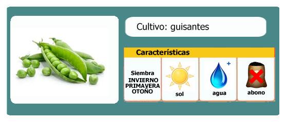 Ficha de cultivos: Guisantes l EcoHortum