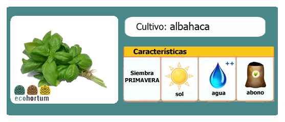 Ficha cultivo albahaca | EcoHortum