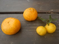 The 3 types of citrus fruits we have