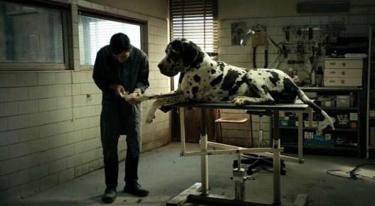 dogman8