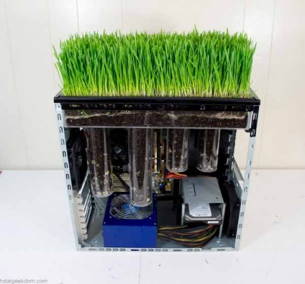 wheatgrass-pc