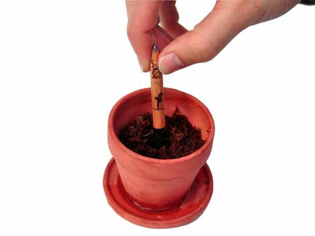 nacimiento semilla sprout