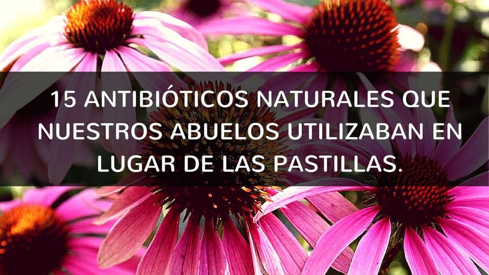 Antibioticos naturales