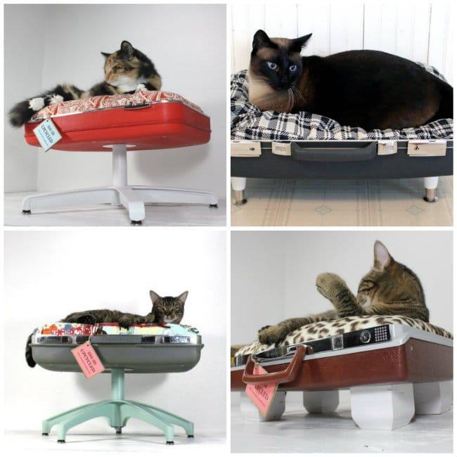 Ideas de camas para gatos con objetos reciclados - Camas para gatos ...