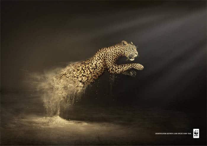 La desertificación destruye 6000 especies cada año2