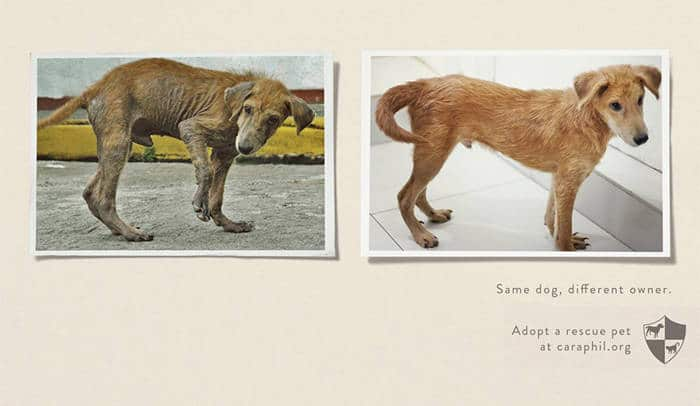 La misma mascota, diferente propietario1