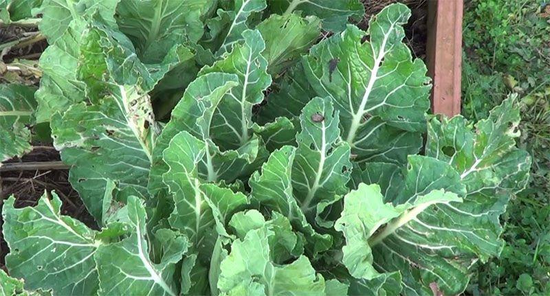 10 Remedios ecológicos para Caracoles1