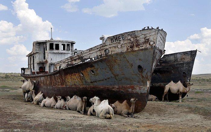 Barco y camellos en el Mar de Aral