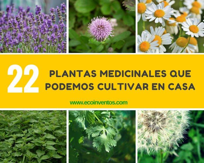 22 plantas medicinales que podemos cultivar en casa for Tipos de hierbas medicinales