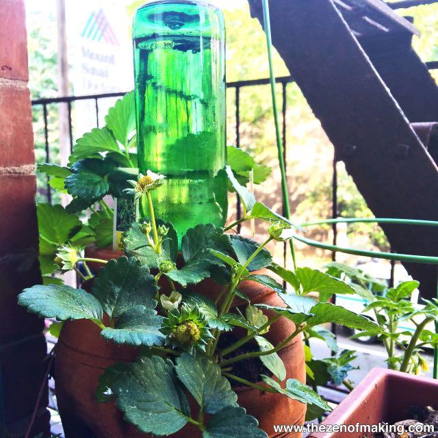 Como usar una botella de vidrio como sistema de regadío autónomo