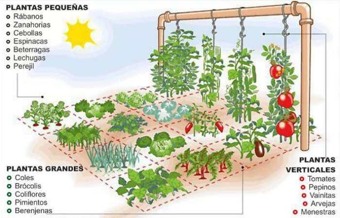 El huerto de un metro cuadrado - El huerto en casa ...