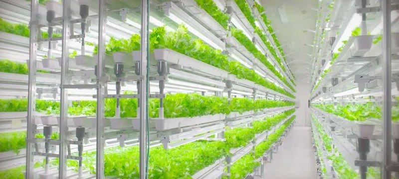 Agricultor una profesión a extinguir. Instalación automatizada en Japón cultiva 500.000 diarias
