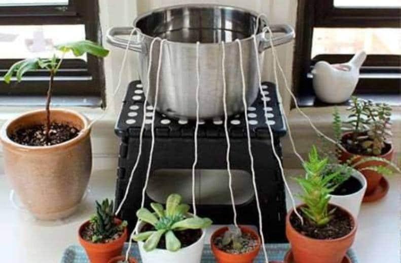 Aprende a regar las plantas si tienes que viajar