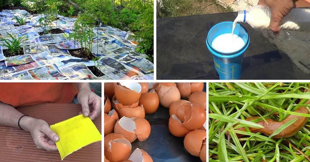 Pesticidas caseros ecológicos para plantas
