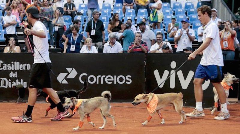 Perros recogepelotas Sau Paulo