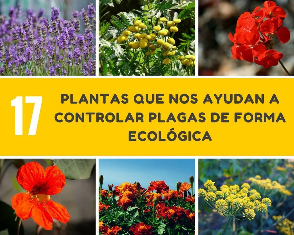 Plantas controlar plagas de forma ecologica