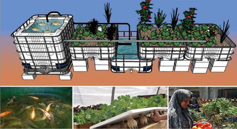 Acuapon a la simbiosis perfecta entre el cultivo de for Como hacer un criadero de peces en casa
