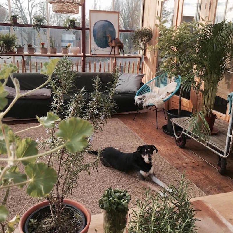 Casa invernadero4