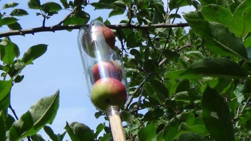 Recolector de fruta casero