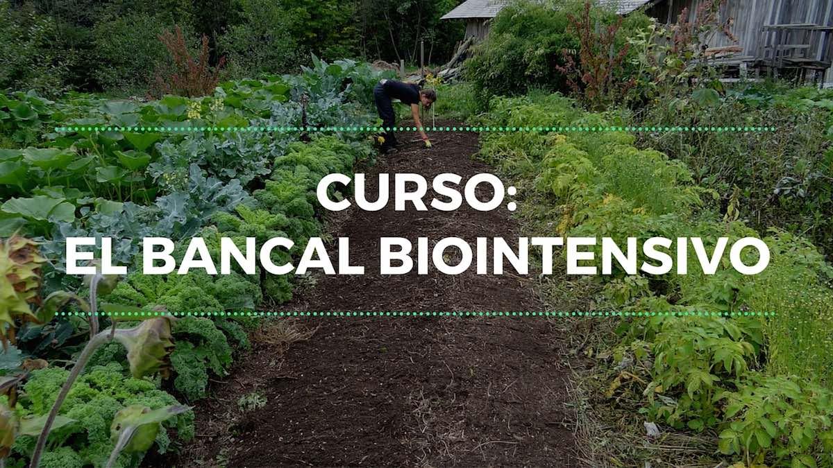 Curso: El Bancal Biointensivo
