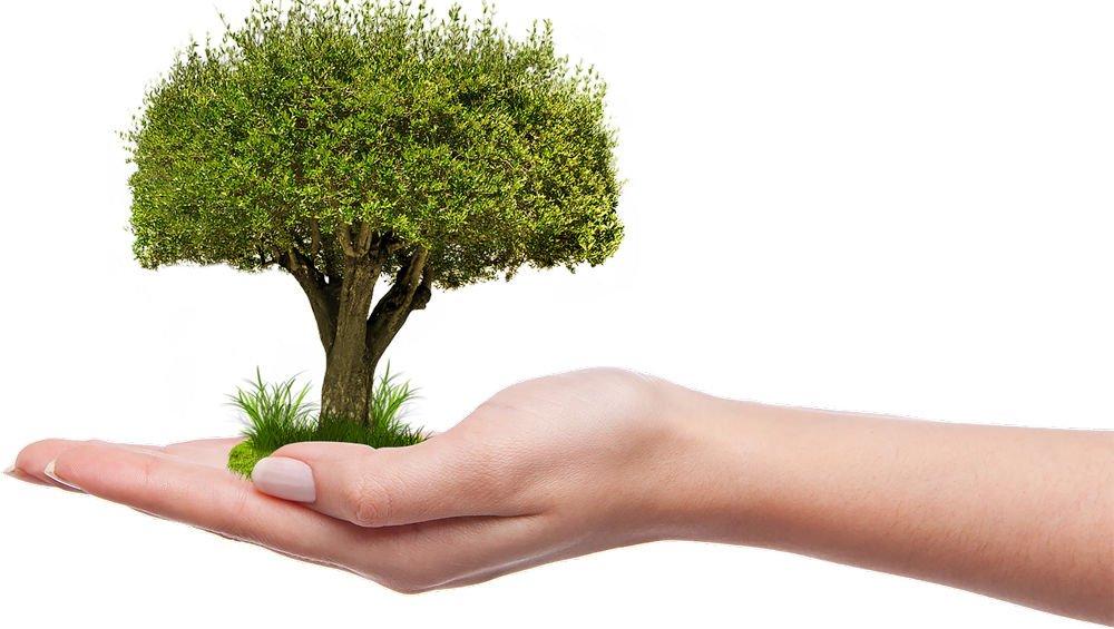 La ciudad Bariloche plantará un árbol autóctono por cada nuevo nacimiento