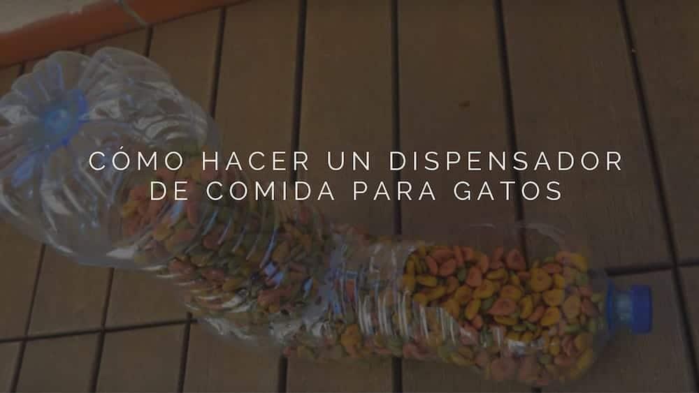 Dispensador de comida para gatos con botellas recicladas