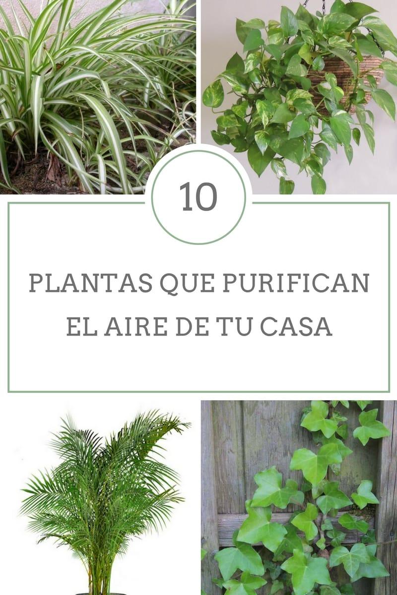 10 plantas que purifican el aire de tu casa for 10 plantas ornamentales y para que sirven