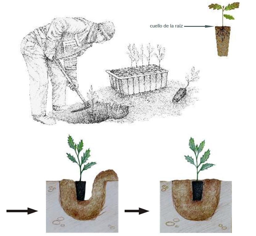 Manual Cómo plantar un árbol1