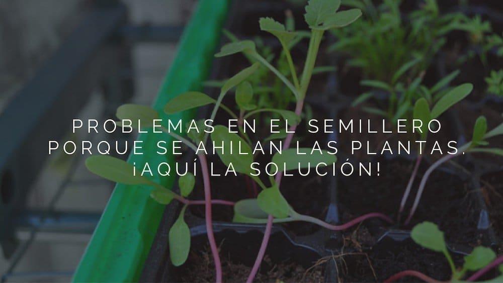 Problemas en el semillero porque se ahilan las plantas