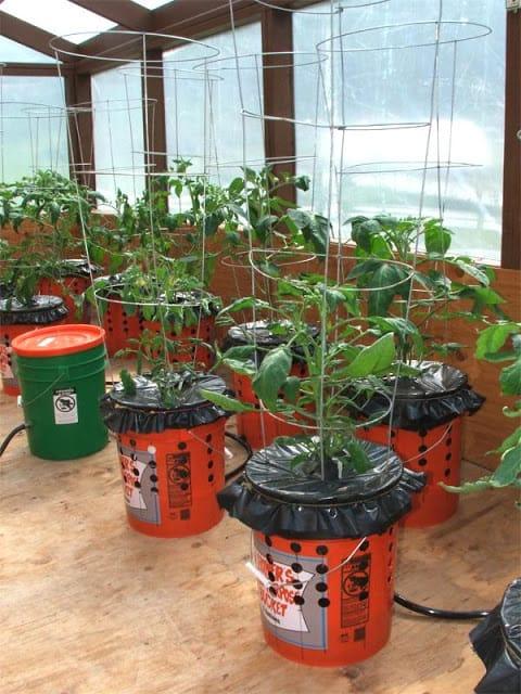 cómo plantar tomates en macetas con riego automático